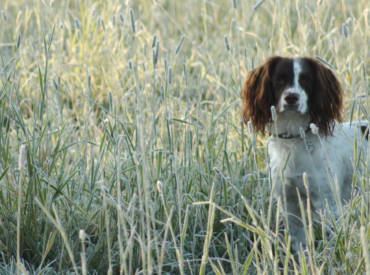 Lameness or limping in dogs: Symptoms, Causes and Treatments.