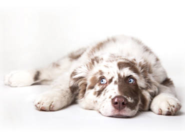 Some useful information with regarding a female dog coming into season.